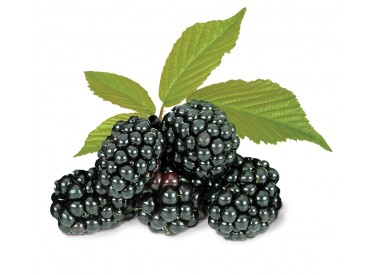 product_blackberries